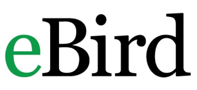Virtual Volunteering with Ebird